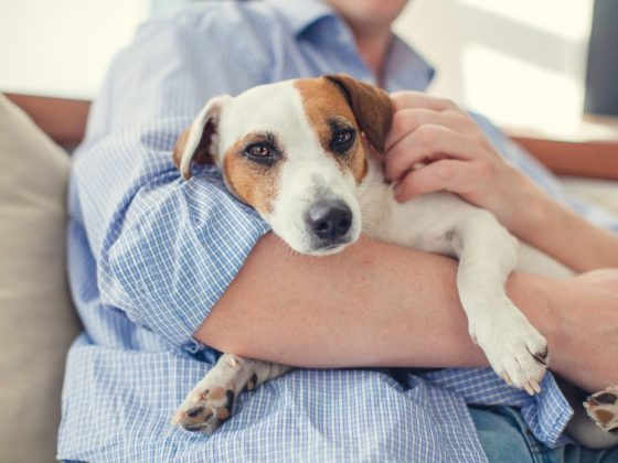 Chemical pollutants in the home degrade fertility in both men and pets, study finds.