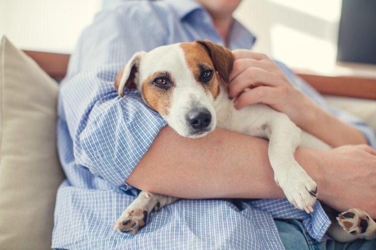 Исследования показывают, что химические загрязнители в доме ухудшают мужскую фертильность как у людей, так и у домашних животных.
